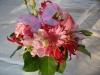 gemengd-roze